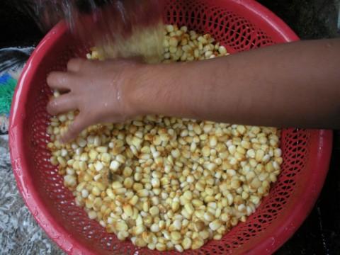 maíz para hacer tortillas de maíz, Guatemala - Foto: Lisa couderé